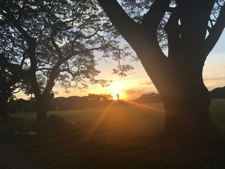 EyeEm Nature Lover EyeEm Best Shots Relaxing Enjoying Life Taking Photos Sunset Sillouette Happy Time By The Trees.