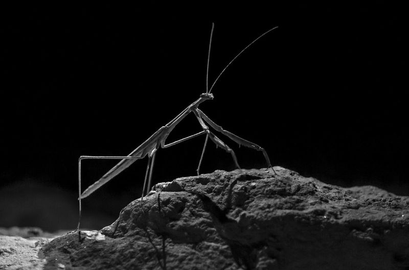 Close-up of insect on rock against black background
