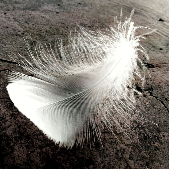 Feathers♡ Feather_perfection Featherlust Feathered Beauty Feather Collection Feathercraft Freshness Just Grounded From My Point Of View Beautiful Malephotographerofthemonth Mobile Photography IMography Getty Images EyeEm Gallery With Love From India💚 truly...urs... Nitin