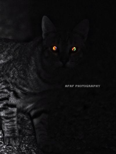 Cat Photo Photography Photographer Cats Canon Cat Eyes