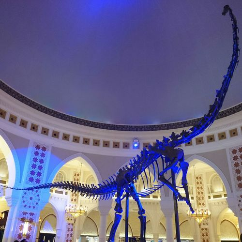 DubaiMall Dubai Skeleton Dinosaurus Bones Dinosaurbones