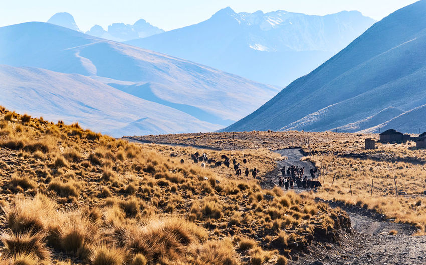 Scenic view of landscape and mountains against sky cordillera real bolivia alpacas