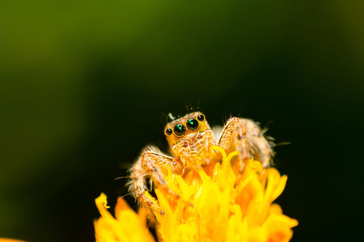 Close-up of spider on yellow flower