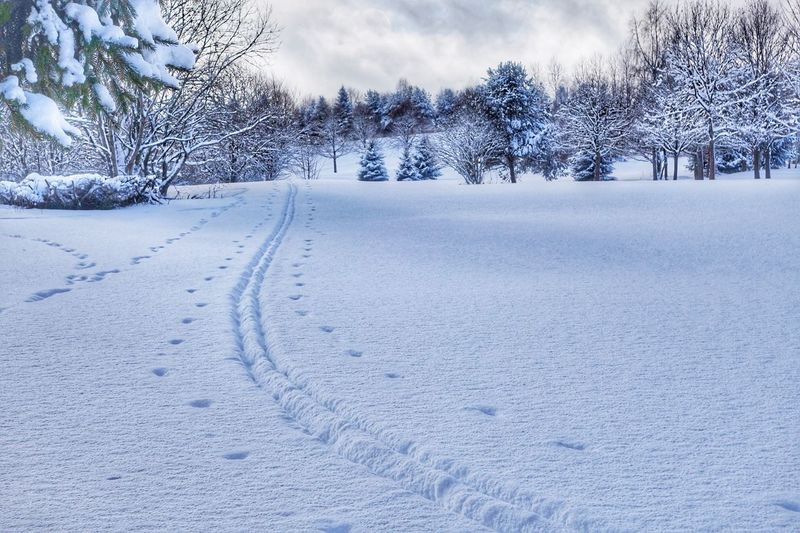 Snowsteps Winter Snow Cold Temperature Weather Tree Nature Beauty In Nature No People Outdoors Tranquility Scenics Day Animal Track Sky Steps Walking Around Beauty In Nature Tranquil Scene Königsfeld Black Forest