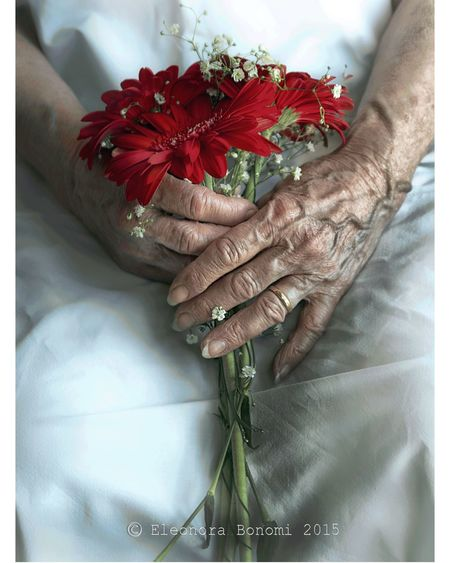 details my vision Person Lifestyles Myprospective Nonna Hands Love Bouquet Flower Holding Bunch Of Flowers Midsection Tradition Red Human Finger Freshness Celebration Event Bunch