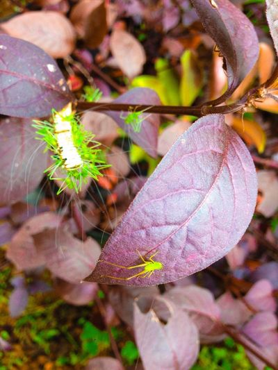 You Name It Leaf Nature Autumn Outdoors Day Growth Plant Close-up Beauty In Nature Fragility Focus On Foreground Change No People Flower