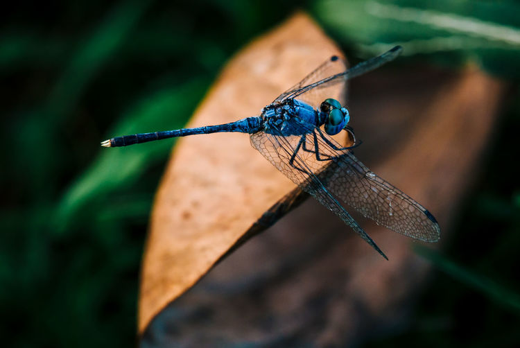 Dragonfly! Dragonfly Wings Outdoors Nature Blue Wildlife & Nature Creatures Close-up Macro_collection Macro Photography EyeEm Best Shots EyeEm Best Shots - Nature