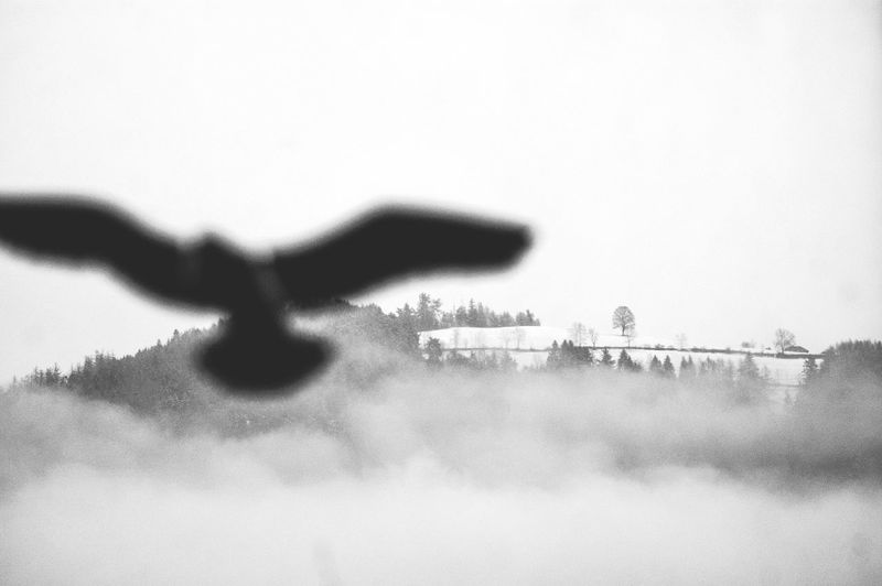 Fake plastic bird sticker on a window with view towards a mountain. Streetphotography Light Snow Shades Of Grey Today's Weather Report Clouds Panorama Landscape Learn & Shoot: Layering B&w Photography Seeing The Sights Learn & Shoot: Balancing Elements