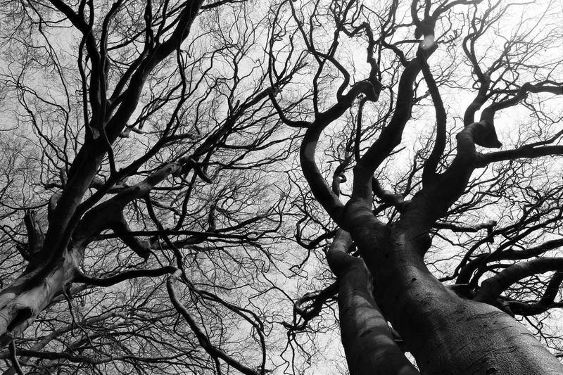 Trees at Loudoun Hill Black And White Trees Black And White Photography No People Outdoors Tree Branch Bare Tree Low Angle View Human Body Part Tree Trunk Human Hand Nature Day Outdoors Sky Beauty In Nature