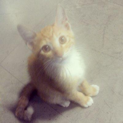 저 눈빛 졸귀.... 일상 Cat 고냥이 고양이