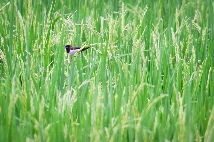 """""""Lonely Bird"""""""
