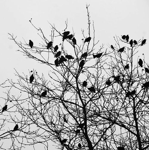 """""""Maybe one day I can fly all over the world and meet other interesting birds."""" Jarod Kintz Eye4photography  EyeEm Best Shots Blackandwhite Black And White Nature_collection Enjoying The View EyeEm Nature Lover Nature IPhoneography Animals Birds Trees Winter"""