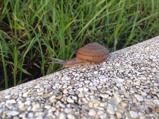 Snail🐌 Animal Themes One Animal Close-up Snail Shell Close Up Snail Snail Shell Snail Closeup Animals Animal_collection Animal Behavior Animallovers Animal Love