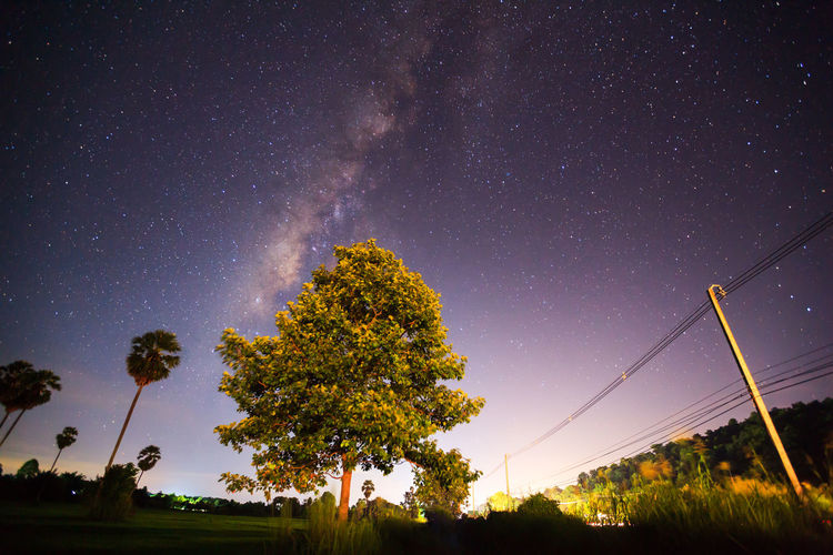 Astronomy Beauty In Nature Galaxy Low Angle View Nature Night No People Outdoors Scenics Sky Star - Space Tranquil Scene Tranquility Tree
