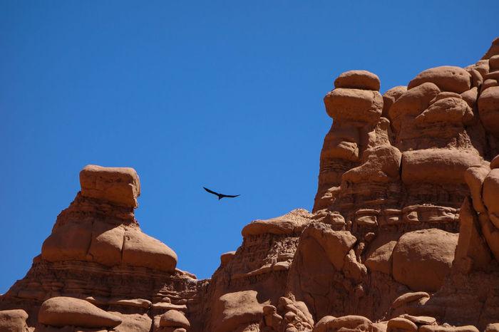 Animals In The Wild Bird Geology Goblin Valley State Park, Utah Goblins Nature Outdoors Rock - Object Rock Formation Rock Hoodoo Western Scene