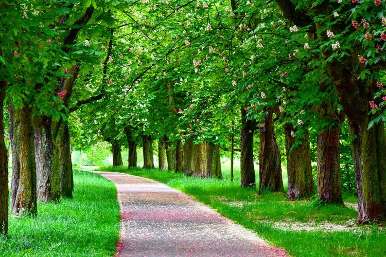 Empty road amidst trees and grass on field