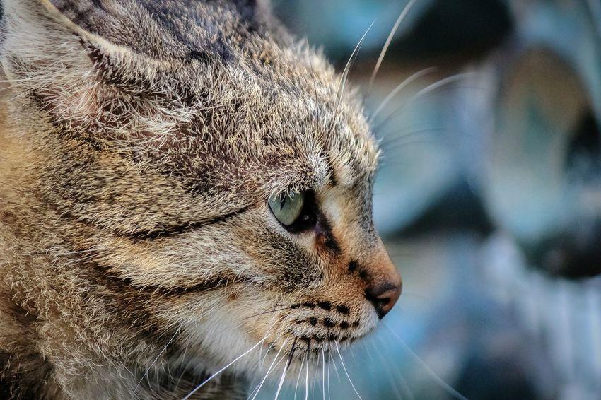 nite nite ?✨?Kedi Aşkı Cat♡ Kediseverler Gununkaresi Anıyakala Turkishfollowers Tr_kadraj NoEditNoFilter Benimkadrajim Walking Around