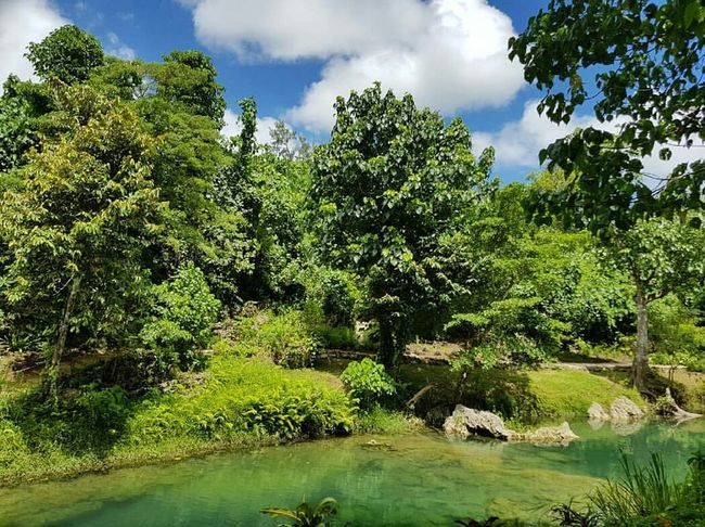 Fiji ❤🌴 Tree Nature Water Green Color Outdoors Day Growth Cloud - Sky Sky Plant Beauty In Nature Scenics Forest Branch No People
