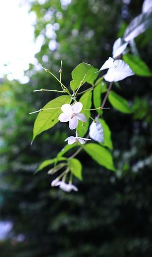 Growth Meawstery Plant Tree Flower Flowers Graden Graden Flower Leaf White White Flower Wild Water Plum EyeEmNewHere