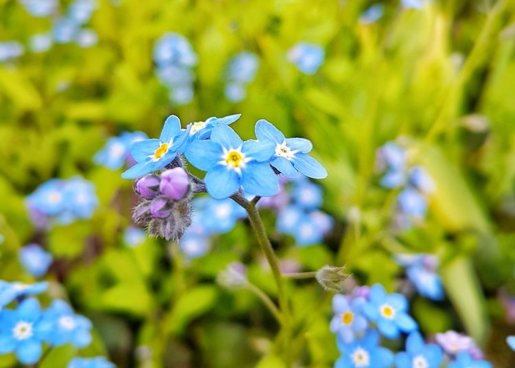 Flower Plant Nature Fragility Purple Outdoors Close-up Blue Day Beauty In Nature Focus On Foreground No People Flower Head Growth Springtime Freshness Botanical Garden Sky