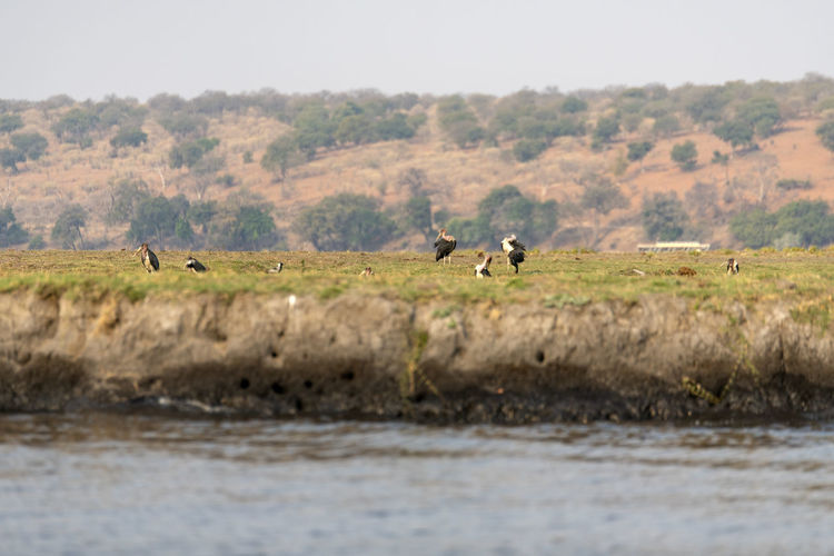View of birds on landscape