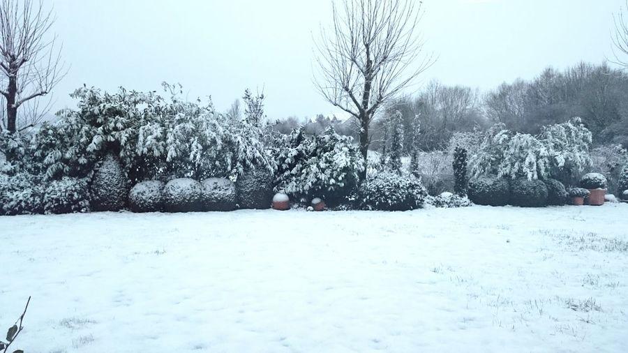 It's Cold Outside Showcase: JanuaryWinter Wonderland Lookslikesugar Wintertime Landscape Snow Trees Garden Photography White Freezing Snowflakes Whiteinwithe