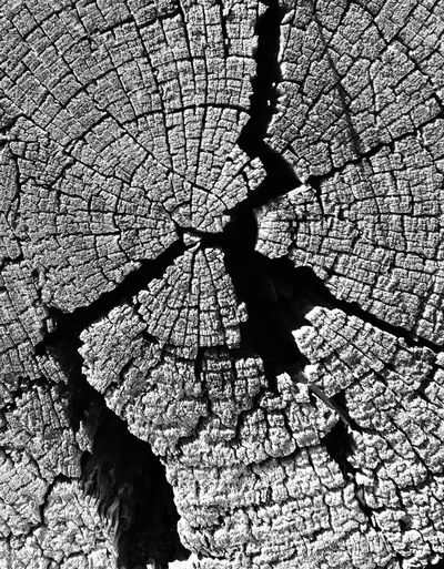 Balck And White Photography Natural Pattern Nature Old Log Pattern Textures And Surfaces Timber Tree Stump Weathered Natures Diversities Natures Diversity