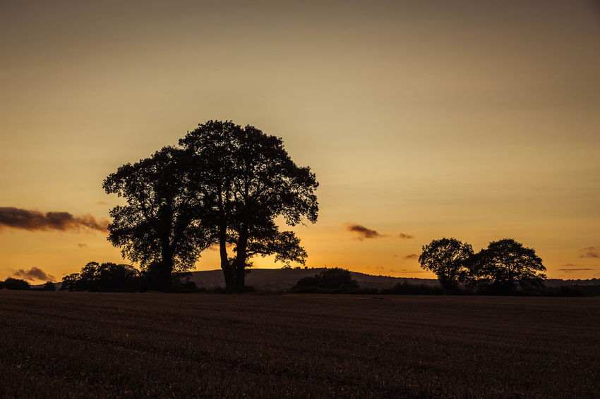 Evening glow... Clee Hill Evening Light Golden Beauty In Nature Evening Skies Evening Sky Field Golden Hour Landscape Landscapes Nature Orange Glow Outdoors Scenics Shropshire Shropshire Countryside Shropshire Hills Shropshire Landscape Silhouette Sky Sunset Sunsets Tranquil Scene Tranquility Tree