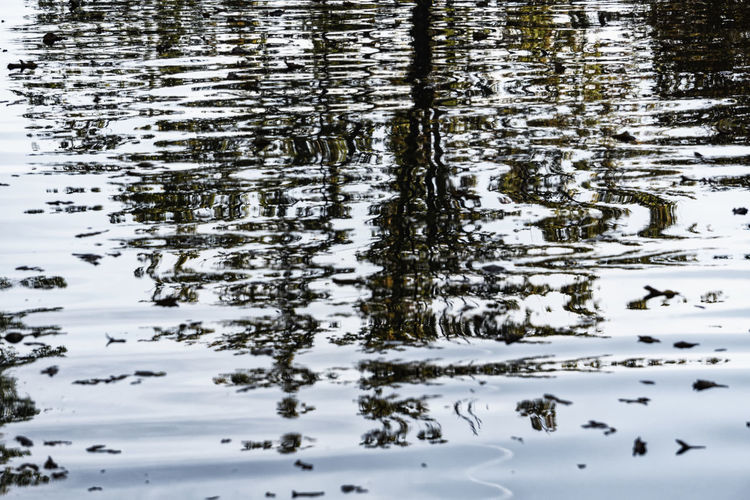 Berlin, Germany, October 10, 2018: Reflections of Trees in Pond at Tiergarten Park Berlin Germany 🇩🇪 Deutschland Color Image Horizontal No People Outdoors Tiergarten Park Water Nature Beauty In Nature Day Reflection Tranquility Lake Plant Backgrounds Waterfront Full Frame Non-urban Scene Reflection Pond Rippled Rippled Water Copy Space Motion