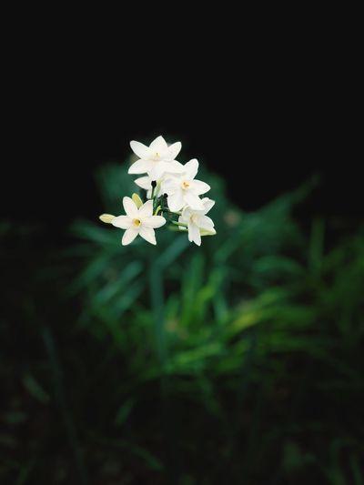 Plant Flower
