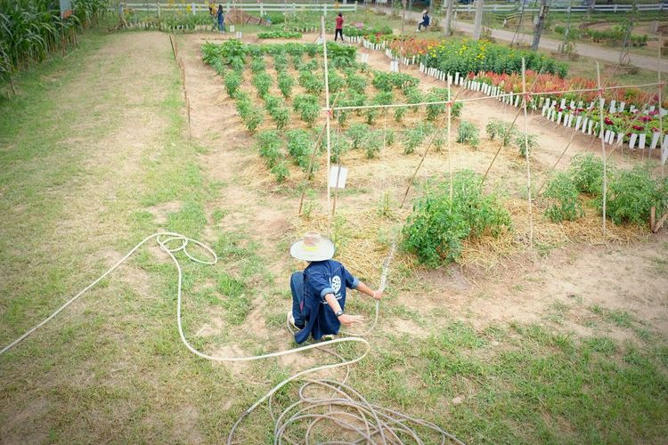 Agriculture Fair Flower Plant Vegetable Summer In The City Working Men Full Length Farmer Agriculture Field Plantation Crop