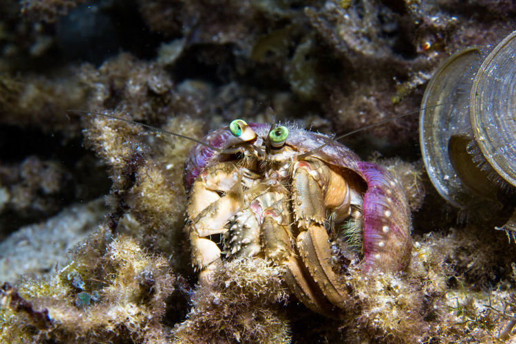 Macro Photography Scuba Diving Travel Underwater World Animal Themes Animal Wildlife Animals In The Wild Camouflage Close-up Crustacean Day Hermit Crab Macro Nature No People One Animal Outdoors Photography Portrait Sea Sea Life UnderSea Underwater Underwater Photography Underwaterphotography