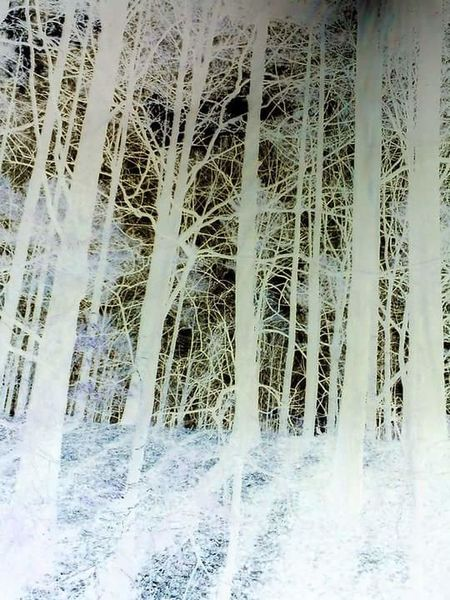 Negative Forest EyeEmNewHere Trees Negative Space Negative Effect Forrest Hill Trapped Vertical Symmetry Bars No Escape Close-up Beauty In Nature Nature No People Outdoors Backgrounds Day