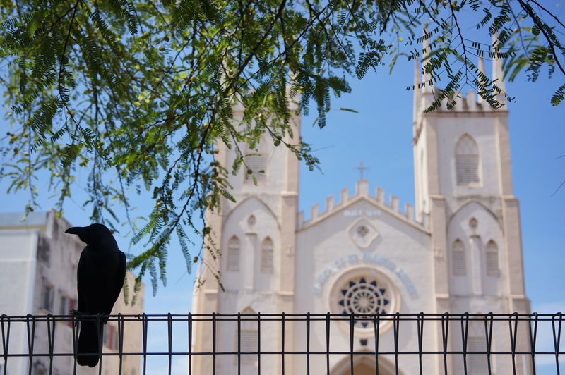 Low Angle View Of Crow Perching On Metallic Fence Against Church Of St Francis Xavier