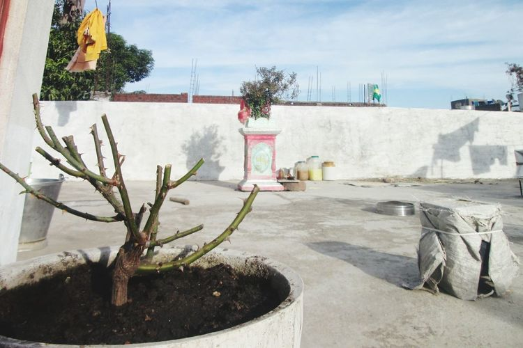 Close-up of potted plants against wall