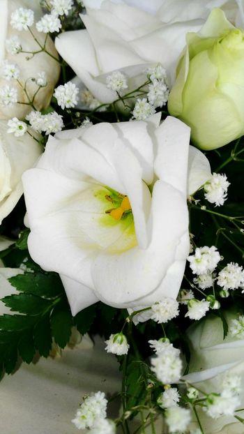 Flower Beauty In Nature Freshness Nature Flower Head Petal No People Day White Flower White Rose - Flower White Roses
