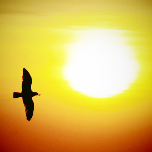Animals In The Wild Flying Animal Themes Animal Wildlife Vertebrate Animal Bird One Animal Silhouette Mid-air Sunset No People Sky Motion Nature Orange Color Yellow Spread Wings Sun Copy Space Freedom Outdoors Sunrise