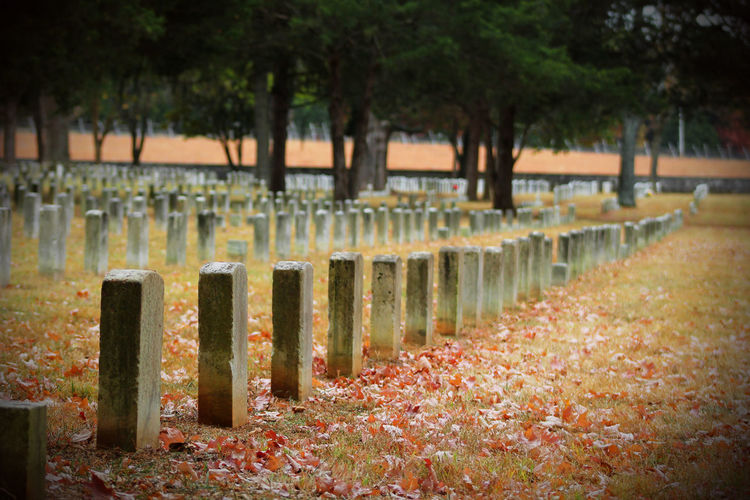 Tennessee Days Cemetery Cemetery Photography Colors Fall Orange Yellow Pretty Sad Huge Warm Cold Temperature Cold EyeEm Selects EyeEmNewHere