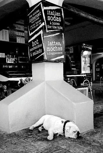 Shades Of Grey the dreaming mutt Bestoftheday Torontophotographer Eye4photography  EyeEm Best Shots EyeEm Best Edits Travelingtheworld  Mexico Besteyeemtravel Dogslife