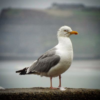 Seagull Nature_collection The Great Outdoors Ig_countryside Sand Seaside Sea Beach
