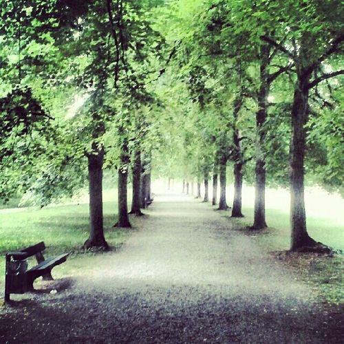 green, love and peace At The Park Into The Woods Green Forest Fresh Air Relaxed Atmosphere