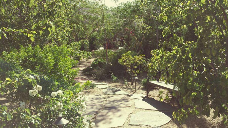 The Great Outdoors - 2015 EyeEm Awards The Traveler-2015 Eyeem Awards Meditation Spot Nature_collection Open Edit The Adventure Handbook Summer Views What I Value