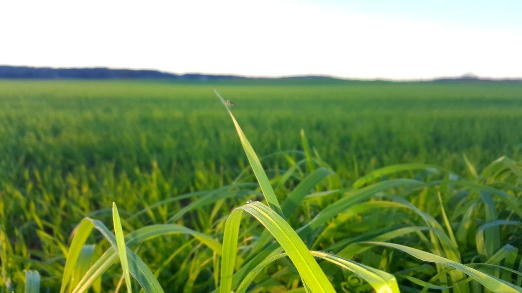 Beauty In Nature Landscape Dirtroads Nature Farmlandscape Farmlife Grassy Grass Selective Focus Selectivefocus EyeEmNewHere