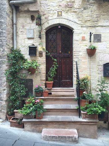 Typical Door in Assisi in Italy Assisi Italy Travel House Flowerpot IPhoneography Door Outdoors Potted Plant Plant