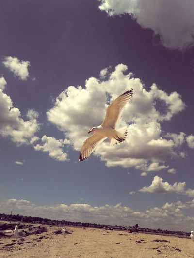 Day at the beach Clouds And Sky Beautiful Blue Sky☁ Flight Flying High Nature Is Awesome Love The View SEAGULL IN FLIGHT