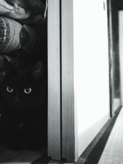 What are you doing here, Nico? Black Cat Huton Japanese Traditional House Tatami Husuma Scared Shadow Cute Lovely Cat Lover Cat Black And White Indoors  Day Architecture No People Close-up