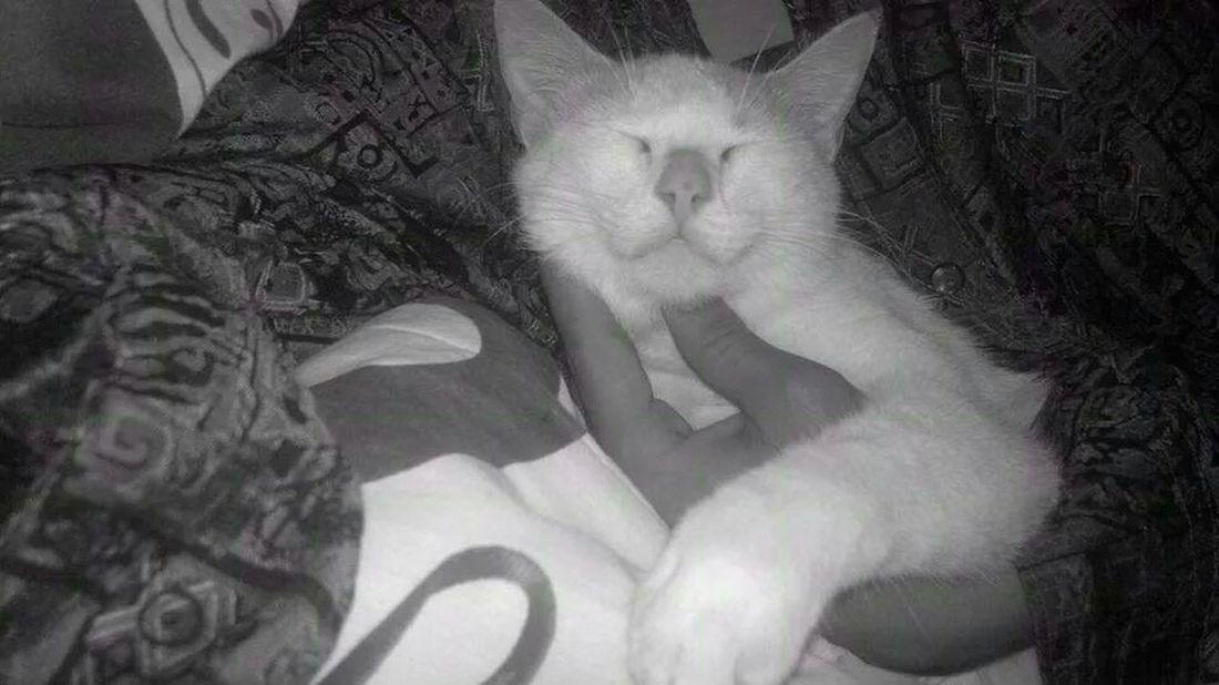 My Pet. Cats ?