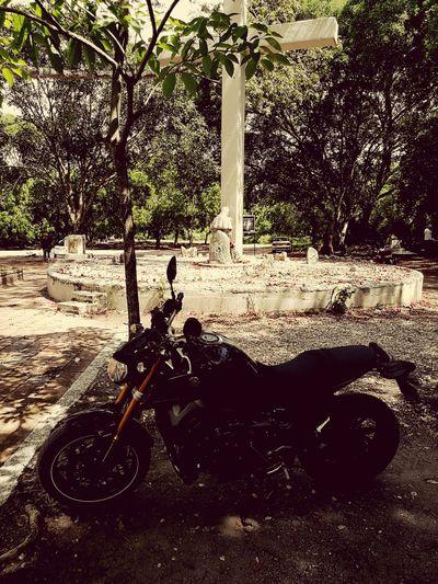 Armero Mt09 Day