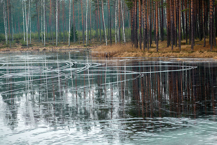 Abstract Backgrounds Beuty Of Nature Birches Cold Day February Ice Lake Landscape Latvia Nature Nature No People Outdoors Photo Wallpapers Pink Color Reflection River Water Water Reflections Winter The Great Outdoors - 2017 EyeEm Awards
