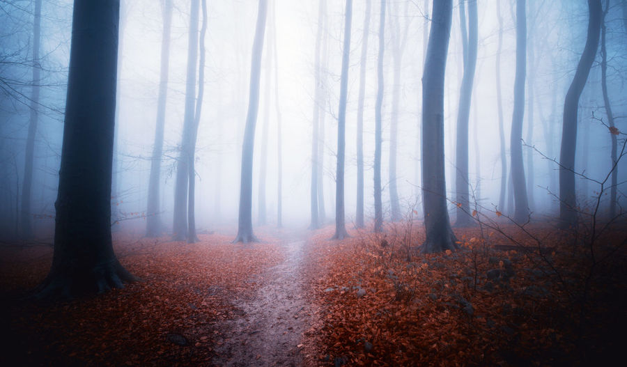 forest during autumn Fairy Fear Path Road Slovakia Abandoned Autumn Autumn Collection Environment Fog Forest Land Landscape Mist Mistical Nature No People Tree WoodLand Woods